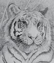 Tiger - Ink Art